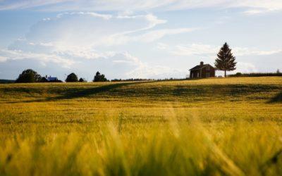 Reforma rolna 1944 w Polsce – kogo dotyczył dekret PKWN i kto może ubiegać się o odszkodowanie?
